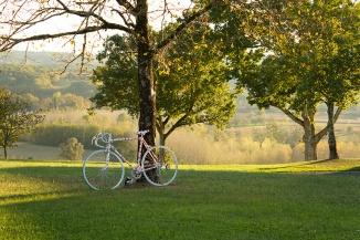 Les vélos poussent comme les champignons